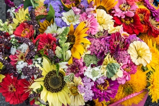 7108-Flowers